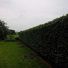 La patte verte -  Entretien parcs et jardins