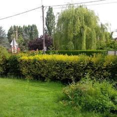 La patte verte - Entretien parc et jardin